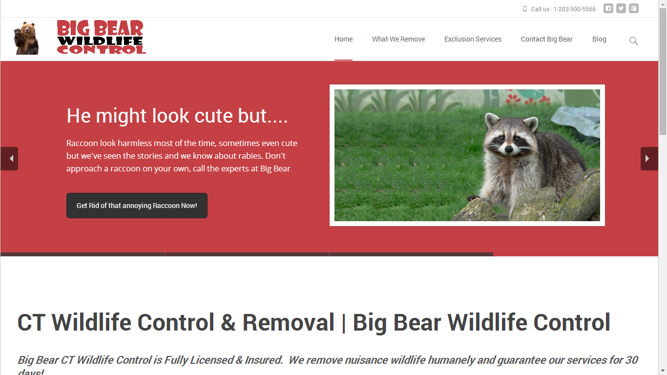 Big Bear Wildlife Control